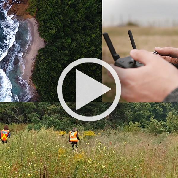 Vue à vol de drone : à la recherche du kudzu