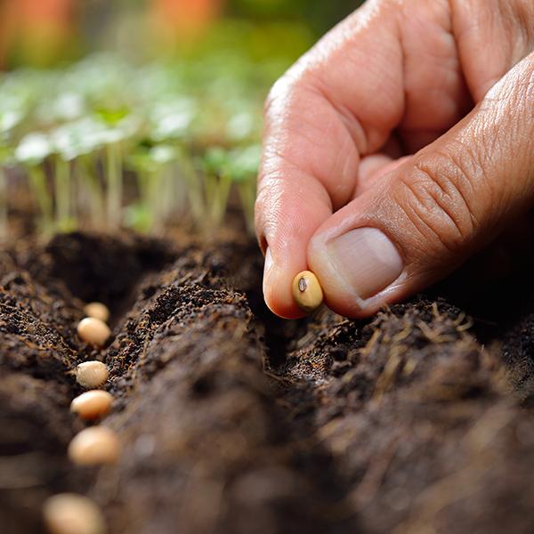 Les minuscules semences que vous achetez en ligne peuvent causer de gros problèmes