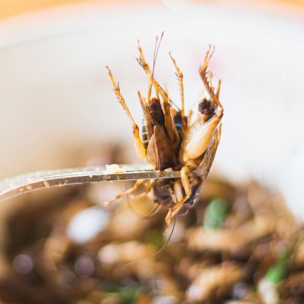 Insectes comestibles: ce qu'il faut savoir avant de prendre une bouchée d'insectes
