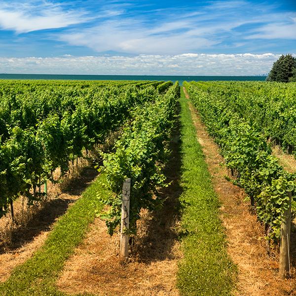 Collaboration avec des spécialistes de la génomique pour protéger le vin canadien