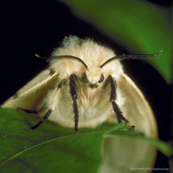 Le projet BioSAFE se sert de patrons génétiques pour étudier les espèces envahissantes des forêts