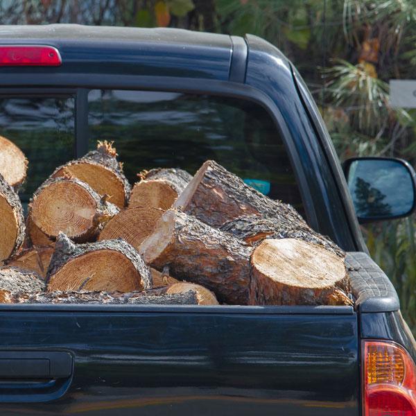 Ne déplacez pas le bois de chauffage: joignez‑vous à la lutte contre les espèces envahissantes