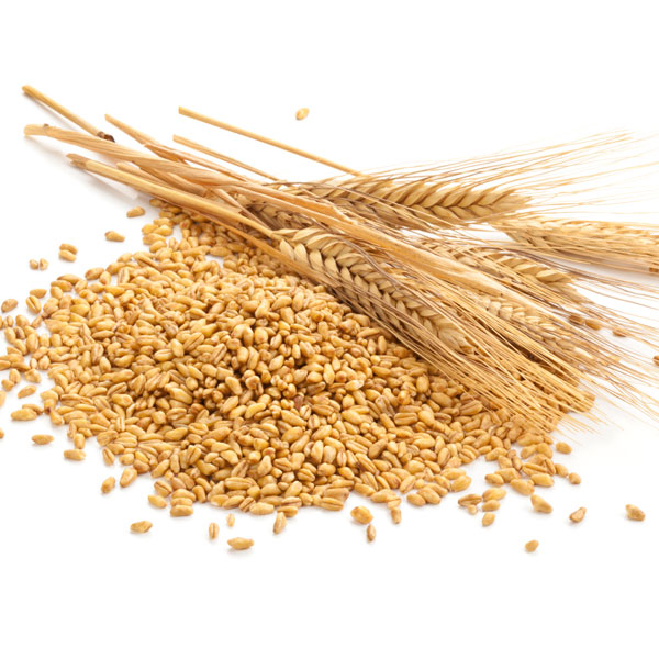 REGAL's golden opportunity for Canadian grains