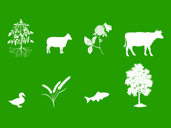 An image with a green background and a variety of white silhouettes including a small bush, a lamb, a flower, a cow, a duck, wheat, a fish and a tree.