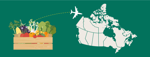 Permits, policies, notices and foreign rules for importing food to Canada.