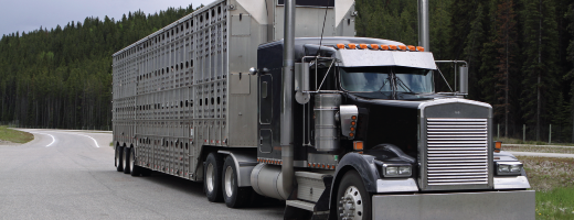 Humane transport and animal welfare - Canadian Food