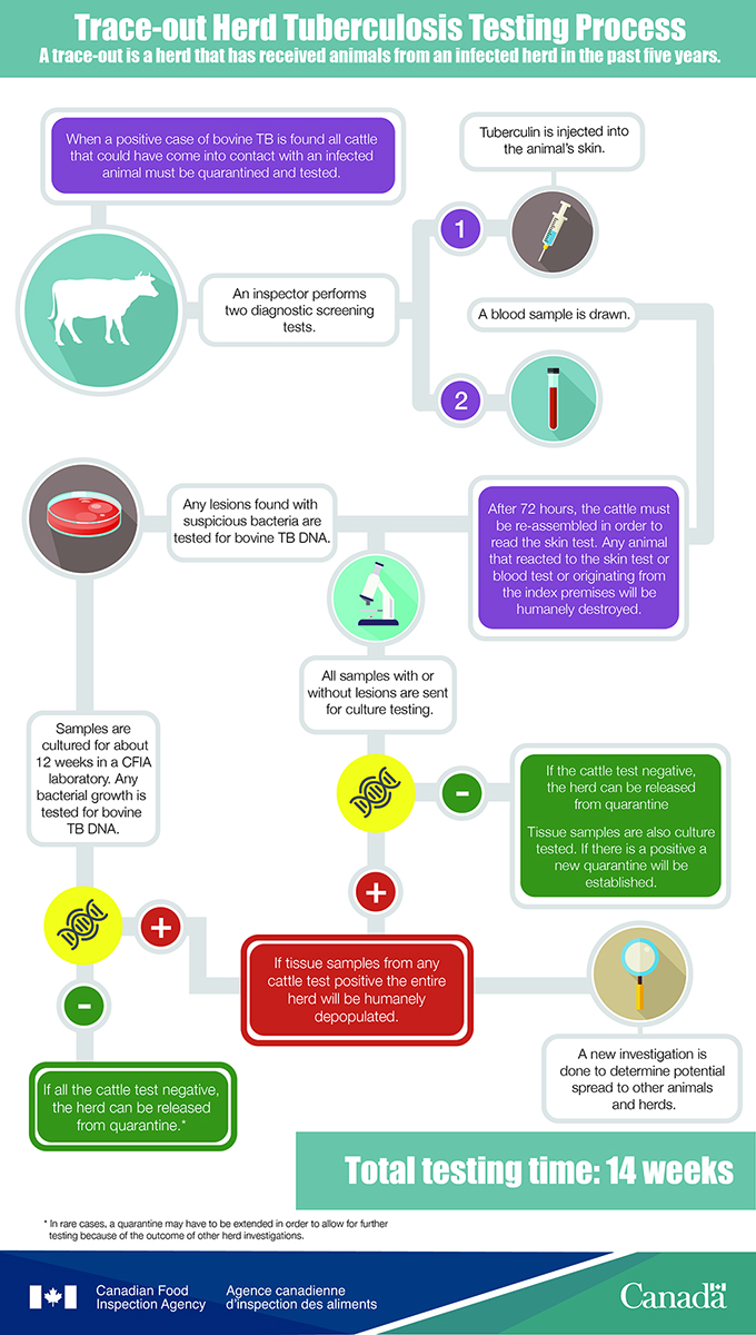 Infographic: Tuberculosis Trace-out Testing. Description follows.