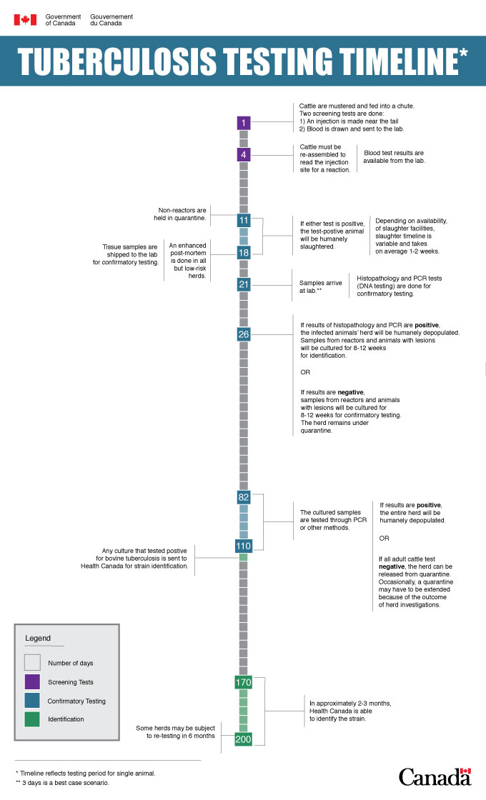 Infographic: Tuberculosis Testing Timeline. Description follows.
