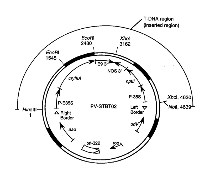 Detailed map of a plasmid vector. Description follows.