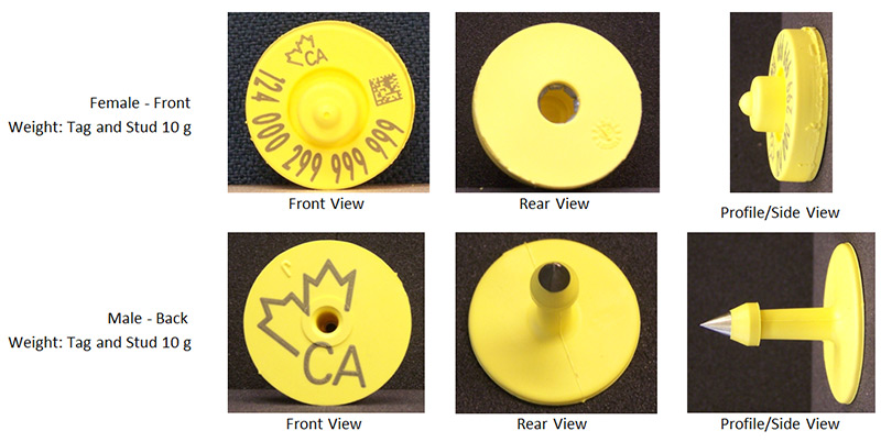 Picture - CFIA code: BOV-02-01. Description follows.