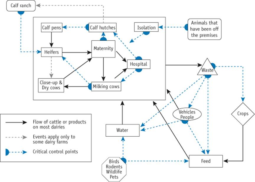 Diagram identifies risk areas and routes of cattle and product flow on a dairy operation. Description follows.