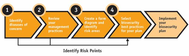 Figure 1 - Four steps in the development of a biosecurity plan and the final process. Description follows.