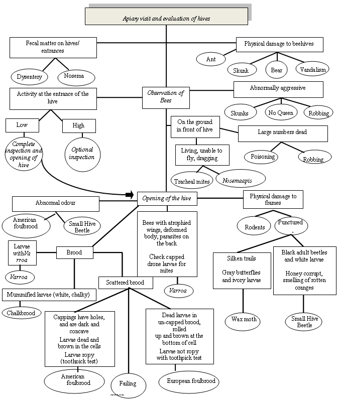 Flowchart - Flowchart - Honey Bee Pest Diagnosis and Monitoring. Description follows.