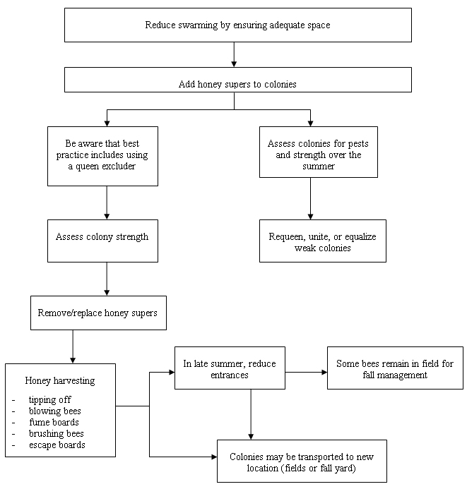 Flowchart - Summer Management For Honey Production. Description follows.