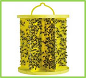 Picture of a yellow plastic cylinder shaped fly trip covered in flies