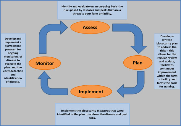 Figure 4 is an illustration of the cycle of activities that should be completed to develop and implement a biosecurity plan. Description follows.