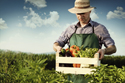 A man in a farm field, holding a crate containing zucchinis, peppers, aubergines and green leafy lettuce.