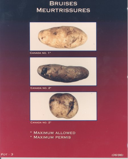 Bruises – maximum allowed for Canada number one and Canada number two potatoes