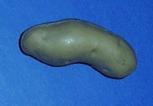 This image demonstrates a potato that is misshapen. The potato has light-brown skin and is slightly curved. The potato has a slight crease on the underside causing both of its ends to slightly curve downwards.