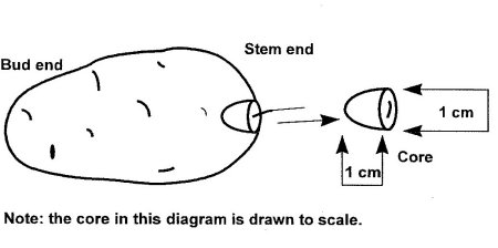 Diagram 1: How to take a core from a tuber. Description follows.
