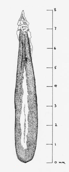 Photo of Anthriscus sylvestris