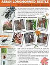 PDF thumbnail: Asian longhorned beetle: An unwanted invasive species