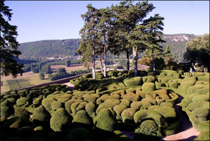Figure 1. Boxwood topiary (in the foreground)