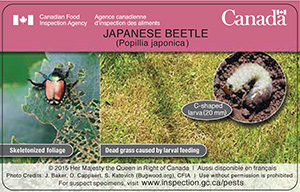 Credit card side 2: Japanese beetle on skeletonized foliage, dead grass caused by larval feeding, and a C-shaped larva (20 mm). Copyright 2015 Her Majesty the Queen in Right of Canada. For suspect specimens, visit www.inspection.gc.ca/pests