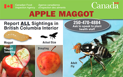 Thumbnail image for plant pest credit card: Apple maggot. Description follows.