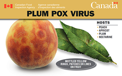 Thumbnail image for plant pest credit card: Plum Pox Virus. Description follows.