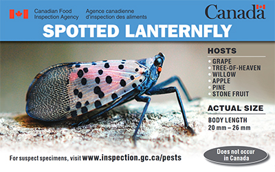 Thumbnail image for plant pest credit card: Spotted lanternfly. Description follows.