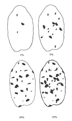 Image - Appendix 9-1.1 Key for Common Scab of Potatoes