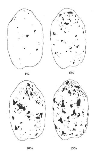 Image - Appendix 9-1.2 Key to Black Scurf of Potatoes