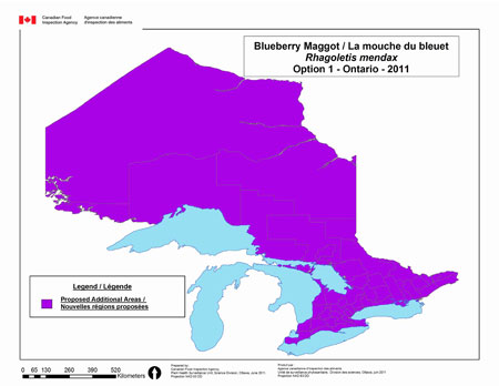 This map depicts the entire province of Ontario as being regulated for blueberry maggot under option 1 for Ontario.