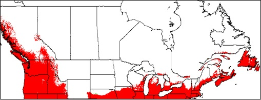 Potential range of Dioscorea polystachya (Chinese yam) in Canada