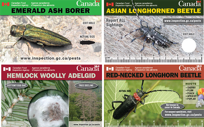 The Plant Pest Credit Cards for Asian longhorned beetle, Hemlock woolly adelgid, Emerald ash borer and Red-necked longhorn beetle are shown on this picture as examples.