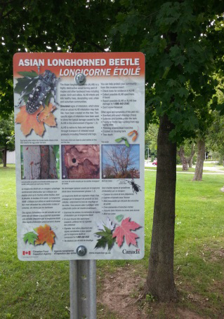 Signage on Asian longhorned beetle beside a tree with simulated signs.