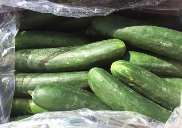 Field cucumbers (bulk, unwrapped) - Variable