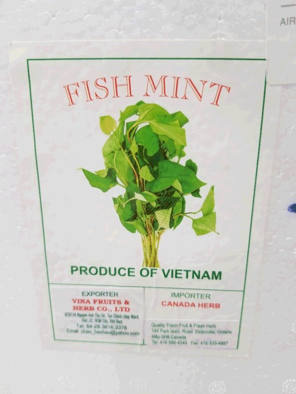 Canada Herb brand Fish Mint recalled due to Salmonella - Updated Food Recall Warning - Canadian Food Inspection Agency
