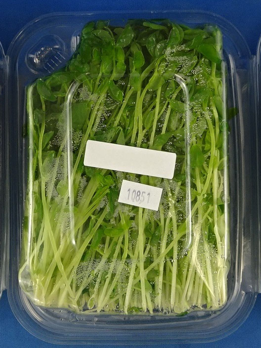 GPM Pea Shoots – 100 grams (back - image 2)