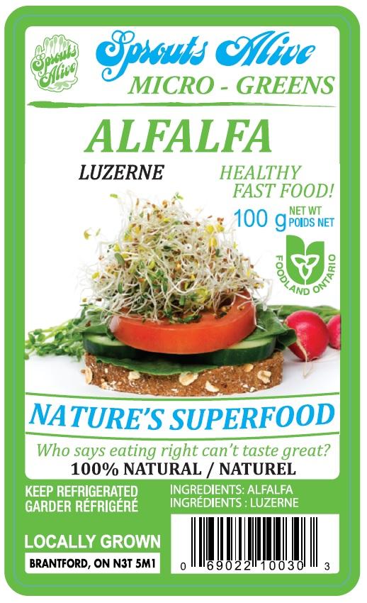 Sprouts Alive - Micro – Greens Alfalfa - 100 g