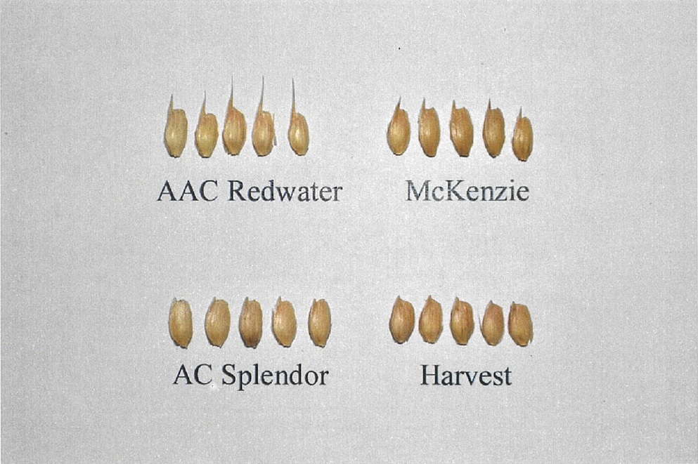 AAC Redwater